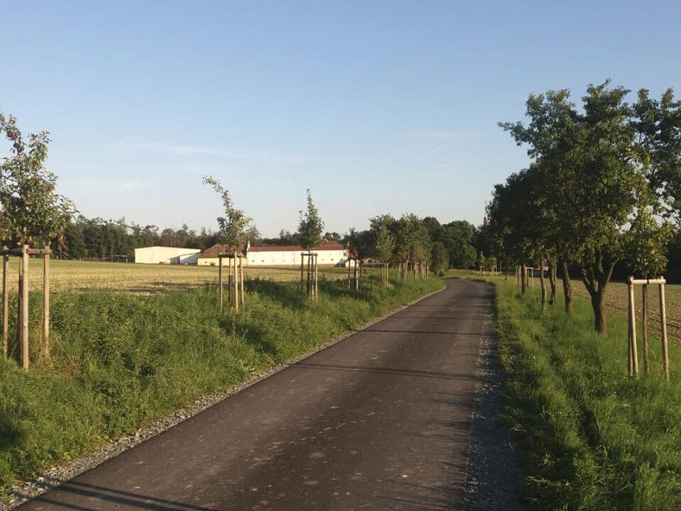 Obnova alejí vkrajině, obec Podbřezí